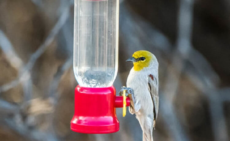 The Birds are Singing at Arizona State Parks and Trails!